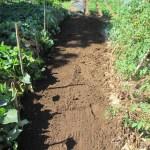 夏播きキャベツ:土づくり