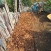 落葉堆肥づくり:8回目の仕込み