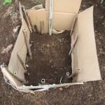 サトイモ:種イモを貯蔵する室の整備