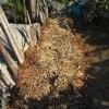 落葉堆肥づくり:9回目の仕込み