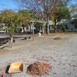 落葉堆肥づくり:落葉かき(10回目)
