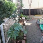 菜園日記:家の周りの整理整頓(1)