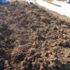 サトイモ:全てを掘り上げる