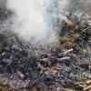 肥料づくり:草木灰づくり(2)