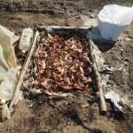 農業施設:ミニトマト・トウモロコシの踏込み温床づくり(2)