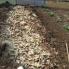 大玉トマト:土づくり2(鞍の深溝に落葉投入)