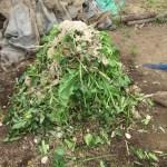 グリーン堆肥づくり:No.5G堆肥の仕込み(1)