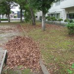 落葉堆肥づくり:落葉かき(1回目)