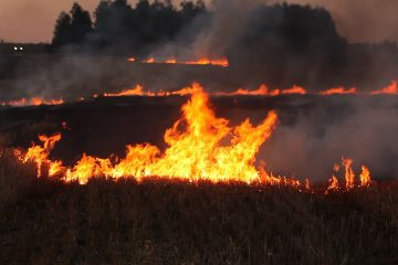 Burning flax straw in the field