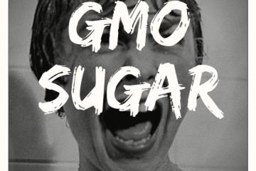 GMO Sugar
