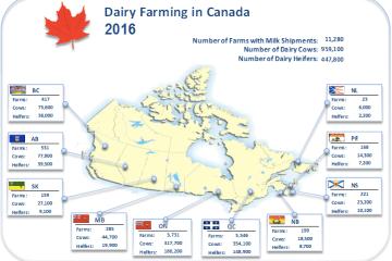 Canada dairy quota