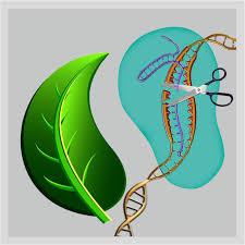 gene editing of plants