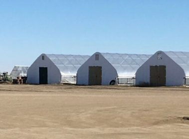 Poly greenhouses at the Field Lab used to conduct initial parent crosses (Photos: Chelsea Sutherland)