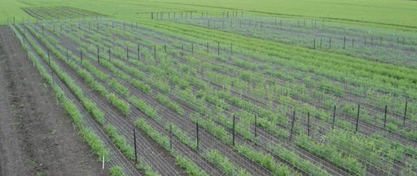 New Crop Varieties: The Journey from Lab to Field - Seed Lab 1