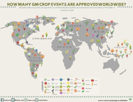 Biotechs GM crops approvals worldwide