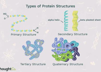 Deficient in Understanding Proteins?