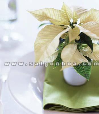 chau hoa trang nguyen de ban mau vang