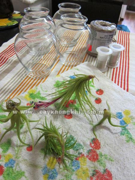 Air Plant Chandelier Supplies