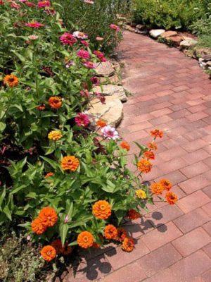 """Đơn giản lối đi lát gạch, bao quanh là những sắc màu ấm áp của các loại cây thường niên của mùa hè trở thành """"xương sống"""" của khu vườn"""