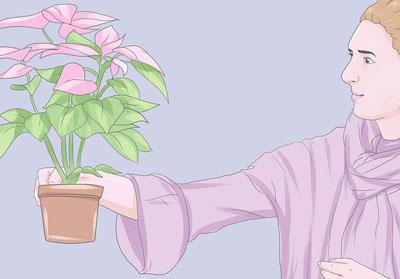 chon hoa trang nguyen khoe