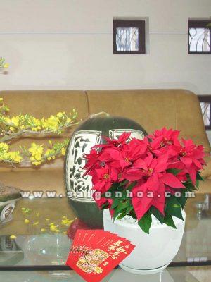 hoa trang nguyen tet