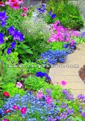 luong hoa nhieu mau sac