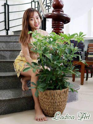 Mách bạn cách chọn chậu sợi mây Ladiva để trồng cây