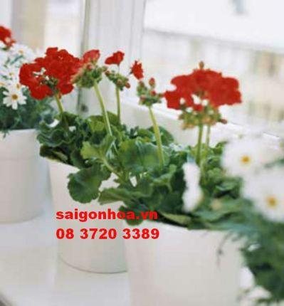 Chậu hoa để bàn