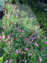 cay hoa trong san vuon
