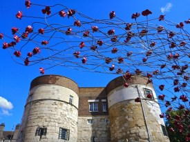 Poppies and the Tower