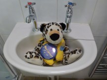 Vaca has his own jacuzzi! - aka the smallest sink in the land!