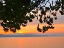 Three Tree sunset