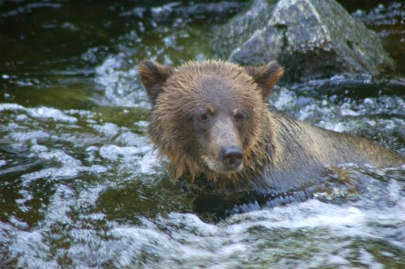 This cub loved to swim