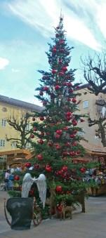 One of many beautiful trees