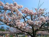 """Весна. Корея. SV """"Natsu"""""""