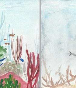 Glimpse into the Blue: Corals of the Arabian Gulf