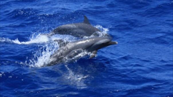 DolphinEscort-300x196