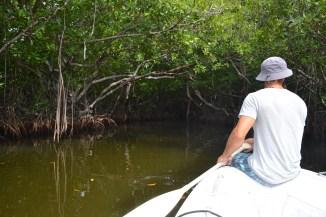 mangrove cave (looking in)
