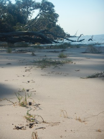 So many animal prints on this beach - so cool to see the signs of such a thriving ecosystem here.