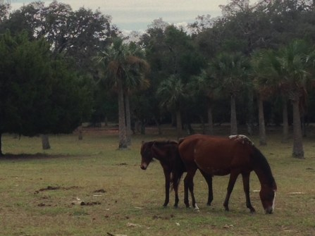 A mama and her foal. So amazing to see them free, without the confines of a ranch or a farm or a zoo. Just beautiful.