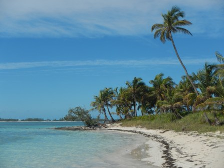 The beach off of Pelican Cay, a short dinghy ride from Green Turtle. Amazing shelling and great snorkeling