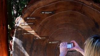Wenn dieser Baum Geschichten erzählen könnte
