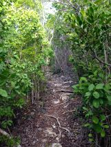 The path that led us to the blue hole on Hoffman Cay.