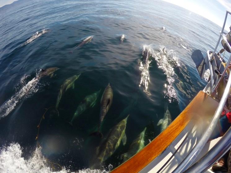 Dolphin Escort