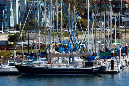 Juniper in Santa Cruz