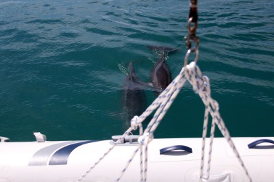 We were visited by dolphins each day we were anchored in La Paz.