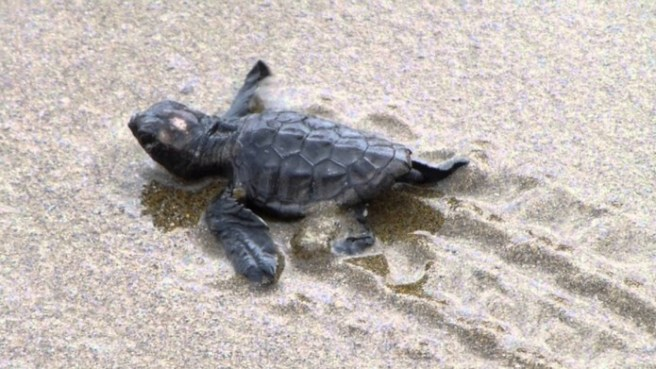 Zakynthos-Turtle