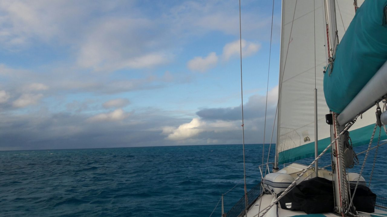 Staniel Cay and Big Major: Here little piggies   ! - Sailing