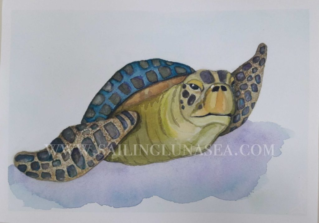 art sailing luna sea watercolor painting turtle