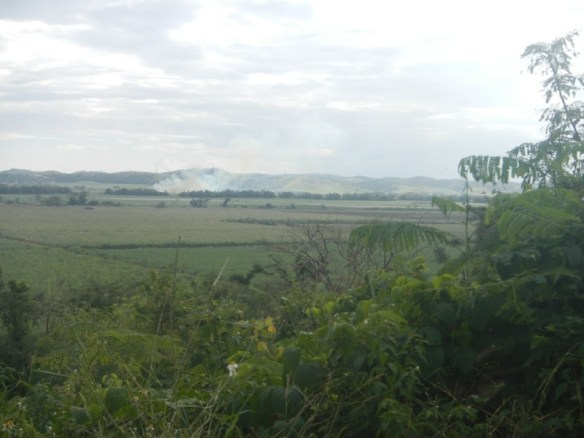 Burning the sugarcane fields before harvest on the E side of Jamaica.